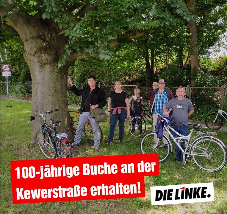 DIE LINKE.LISTE: 100-jährige Buche an der Kewerstraße erhalten